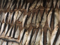 Сушка рыбы и мяса